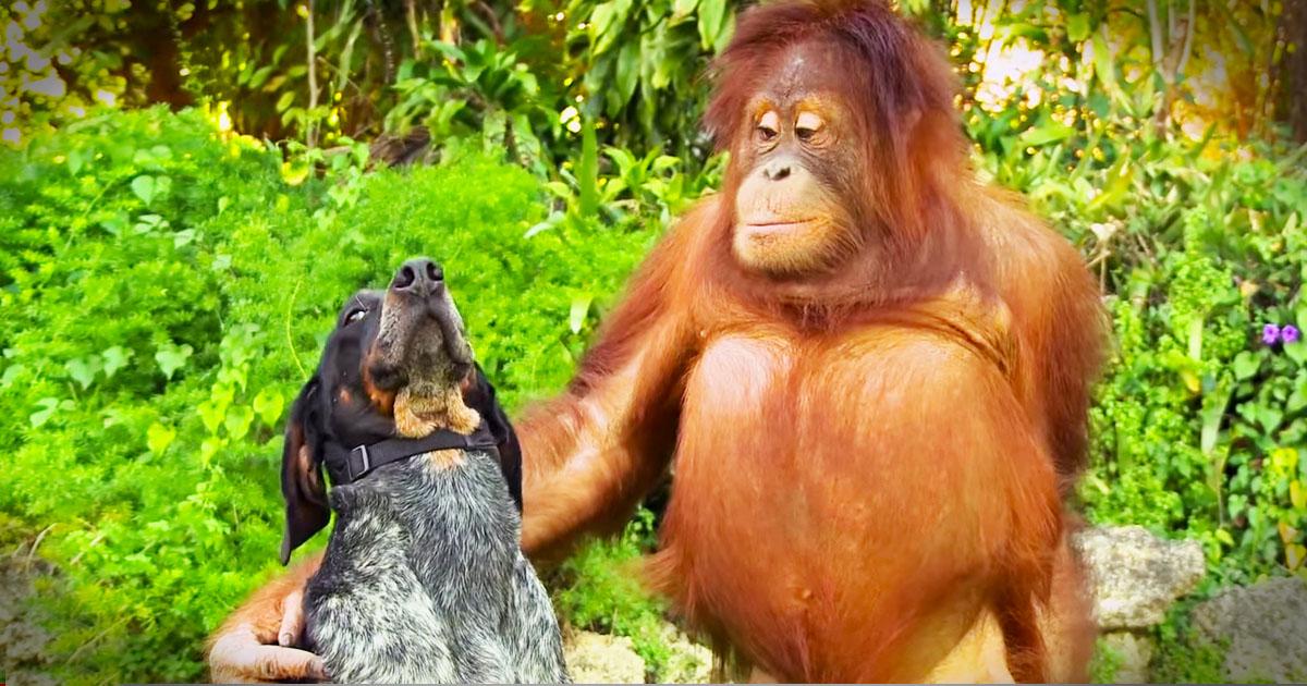 которому смотреть смешные животные новый выпуск своей работе