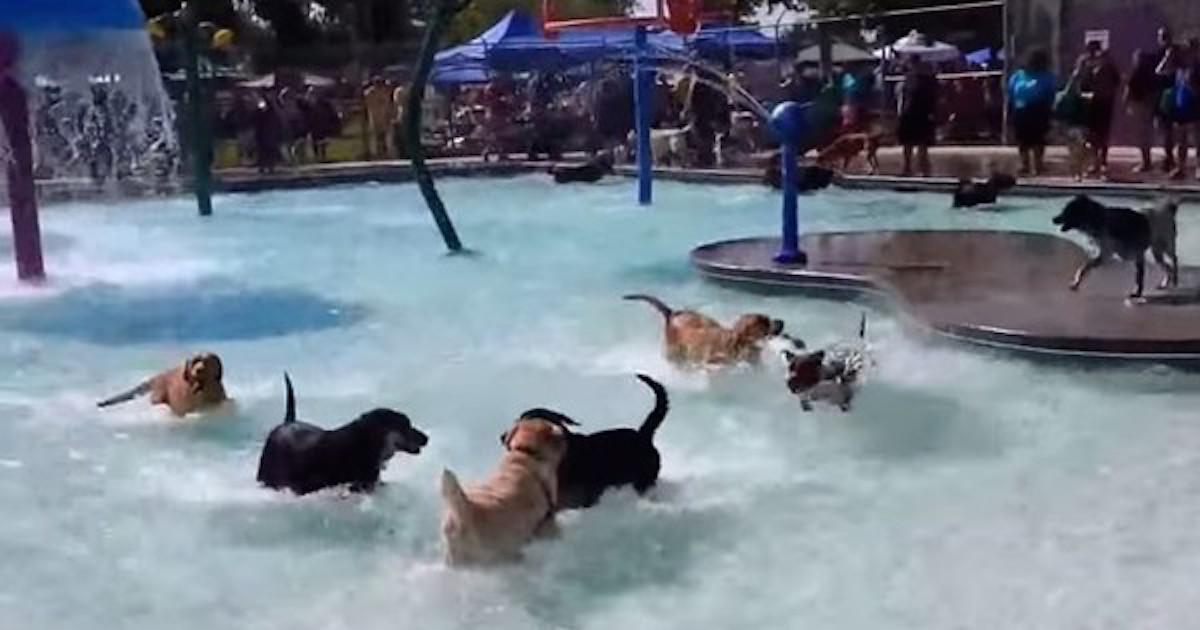 Impreza basenowa psów – prawdziwy raj w upalny dzień