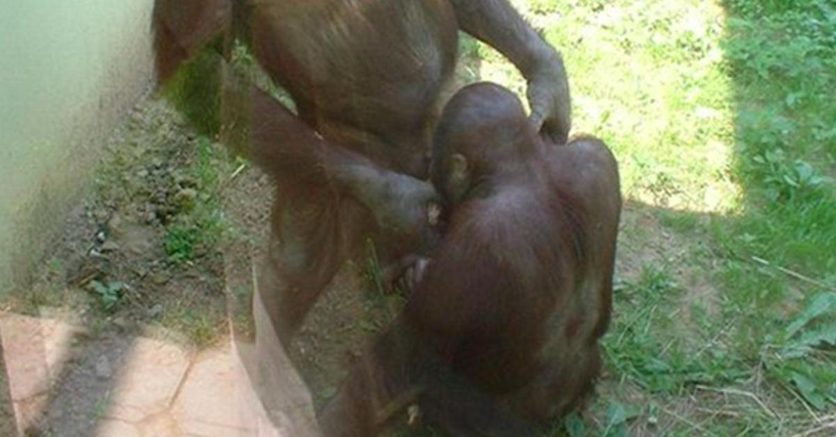 17 razy, gdy wycieczka do zoo przeszła najśmielsze oczekiwania