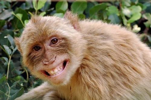 Masz zły humor? Te zdjęcia 31 wesołych zwierząt od razu cię rozweselą!