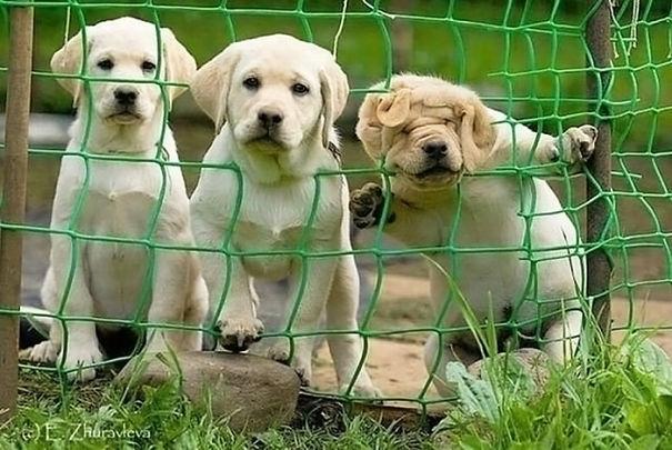 20 komicznych wpadek psów, które rozbawią Cię do łez. Coś mi mówi, że więcej tego nie zrobią