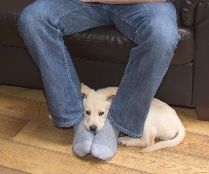 Zaskakujący powód, dla którego pies kładzie swoją głowę na Twoich stopach