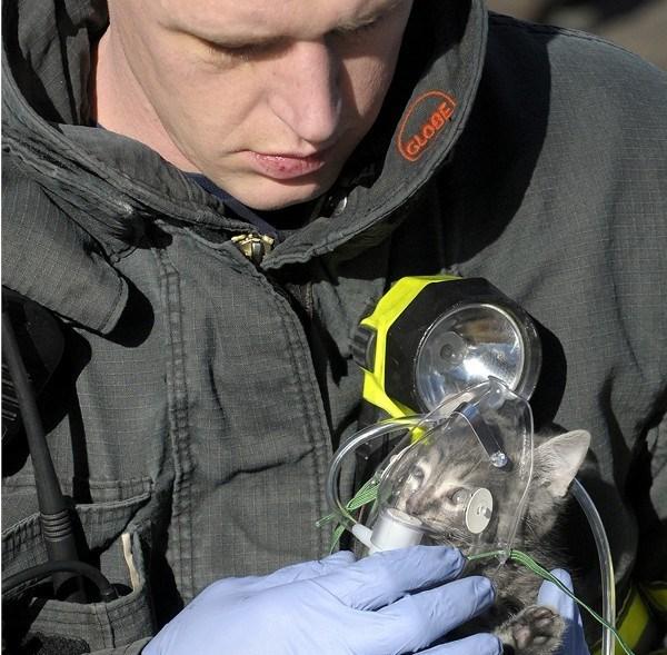 Zdjęcia strażaków i uratowanych zwierząt, które poruszą serce największego twardziela