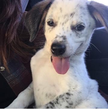 29 psów ze schroniska, które po adopcji wreszcie poznały smak ludzkiej miłości