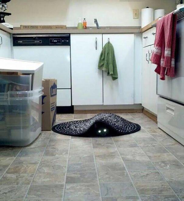 27 zdjęć, które pokazują, że w kotach drzemie demoniczna strona. #3 Mam ciarki na całym ciele