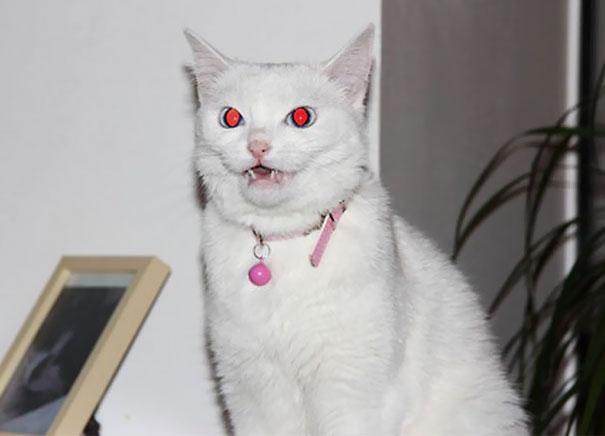 27 zdjęć, które pokazują, że w kotach drzemie demoniczna strona