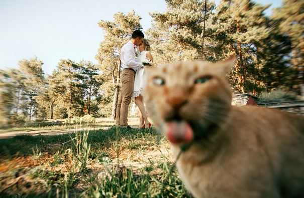20 zdjęć, które zostały całkowicie zrujnowane przez koty. Efekt jest przekomiczny