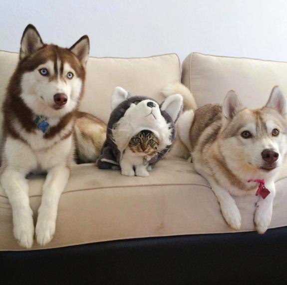 18 zabawnych kotów, które myślą, że są psami i psów, przekonanych o swojej kociej naturze