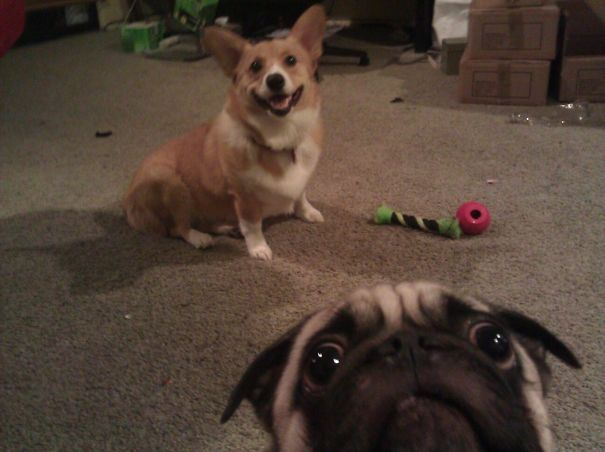 34 śmieszne zwierzaki, które skradły całą uwagę na zdjęciach. Mistrzowskie ujęcia