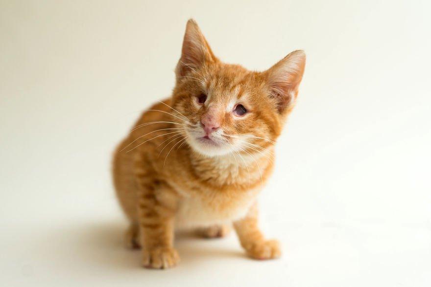 Robi zdjęcia niewidomym kotom, by pokazać, że one również zasługują na miłość i prawdziwy dom