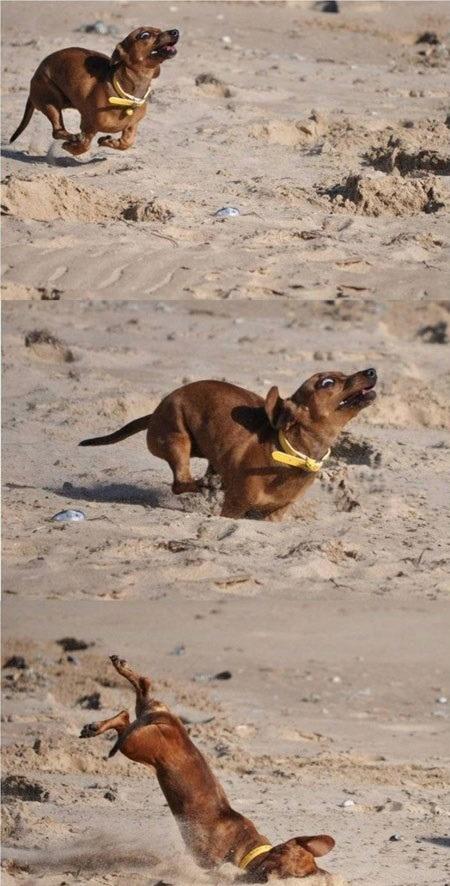 25 psów, które zostały przyłapane w bardzo śmiesznych pozycjach