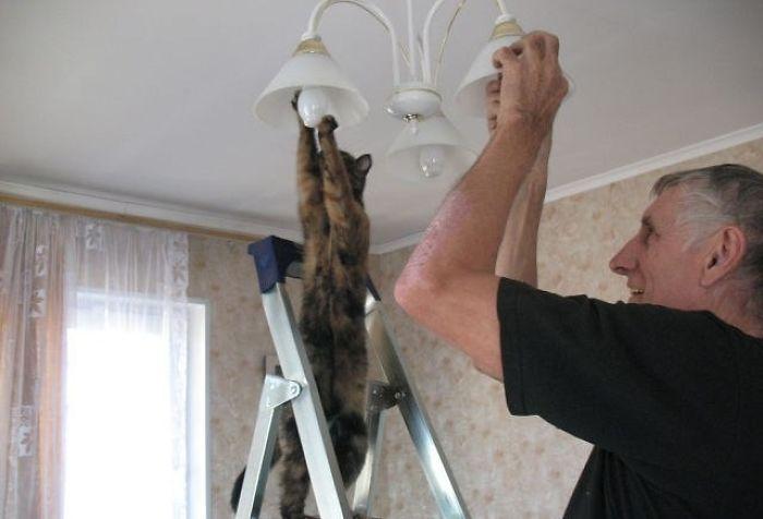 23 zdjęcia pokazujące, że koty to najdziwniejsze stworzenia, z jakimi mamy do czynienia