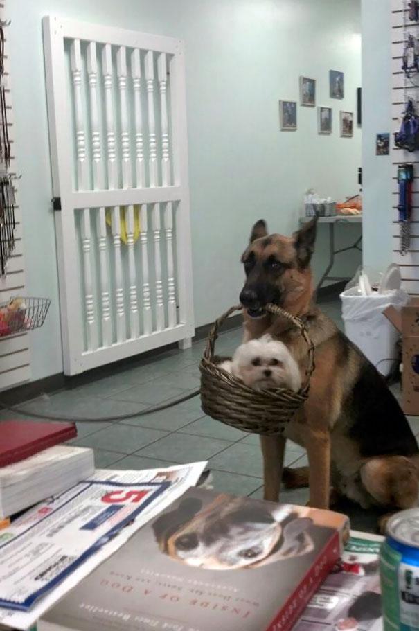 10 zdjęć zrobionych psom, które robią niepokojąco dziwne rzeczy. Trudno będzie Ci je zrozumieć!