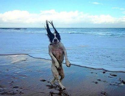 24 psy, które miały idealne wyczucie. Te ujęcia to mistrzostwo!