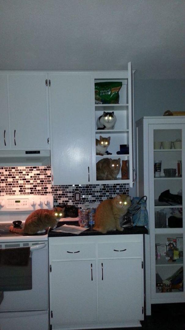 20 kotów, które zostały przyłapane na gorącym uczynku. W samą porę!