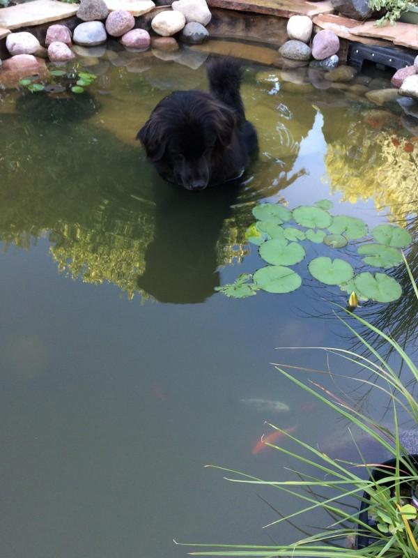 14 psiaków, które uważają, że natura spłatała im figla i umieściła je w złym ciele