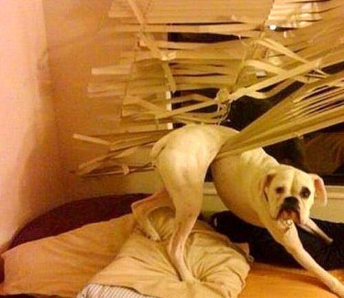 32 śmieszne psy, które popełniły błąd w najbardziej uroczy sposób, jaki tylko mogły