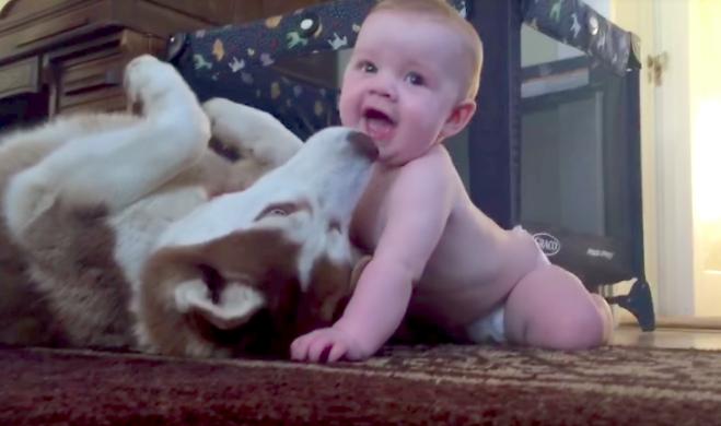 Dziecko raczkuje w kierunku psa, a czworonóg ma najsłodszą reakcję kiedykolwiek
