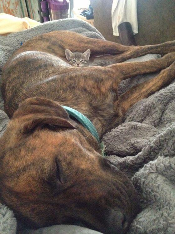 Te psy i koty uwielbiają razem spać. Oto 10 najlepszych zdjęć wykonanych przez ich właścicieli