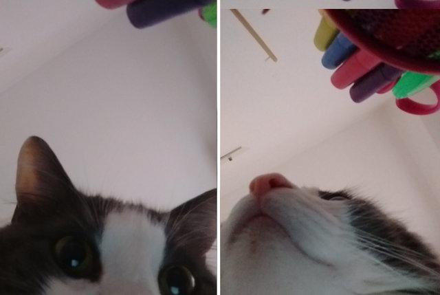 Kot ukradł właścicielce telefon i zrobił sobie zabawną sesję. Futrzak stał się gwiazdą sieci