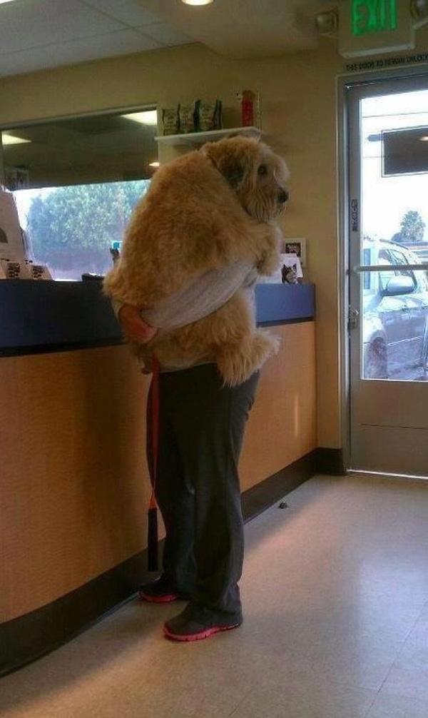 12 psów, które zdały sobie sprawę, że jadą do weterynarza. Ich miny mówią same za siebie!