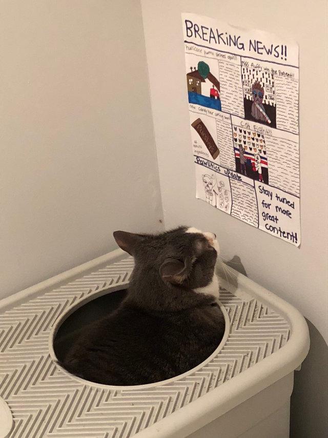 Dzieci wykonały specjalną gazetę dla kota, aby nie nudził się w czasie załatwiania potrzeb