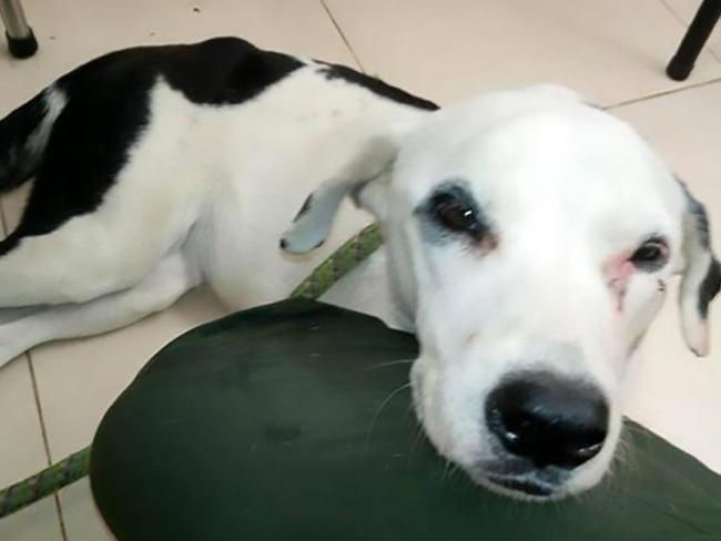 Ktoś porzucił go na lotnisku. Pies przez miesiąc czekał, aż właściciel w końcu go odbierze