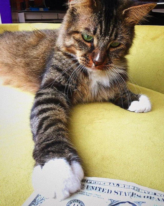 Ta kotka wyjątkowo uwielbia pieniądze. Jej opiekunowie postanowili to wykorzystać