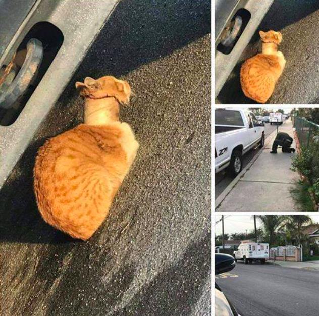 Znaleźli bezpańskiego kota. Byli przerażeni widząc, co znajduje się na jego szyi
