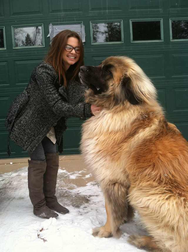 14 ras psów, które jako szczenięta są malutkie, a później wyrastają na prawdziwe giganty