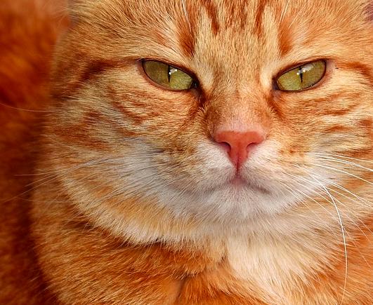 10 rzeczy, których pod żadnym pozorem nie powinieneś robić swojemu kotu!