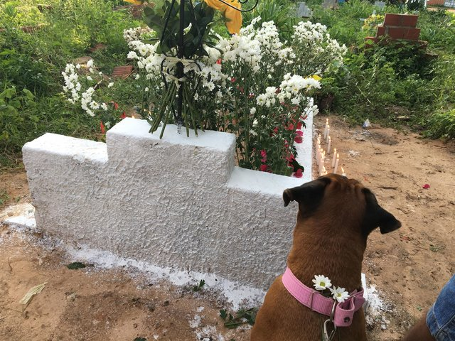 Suczka uczestniczyła w pogrzebie ukochanej pani. Jej zachowanie poruszyło wszystkich