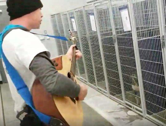 Zaśpiewał piosenkę psom ze schroniska. Reakcja czworonogów wywołała u niego łzy