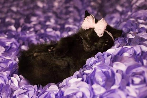 Wykonała niezapomnianą sesję 8-tygodniowej kotce. Zdjęcia skradły serca ludzi na całym świecie