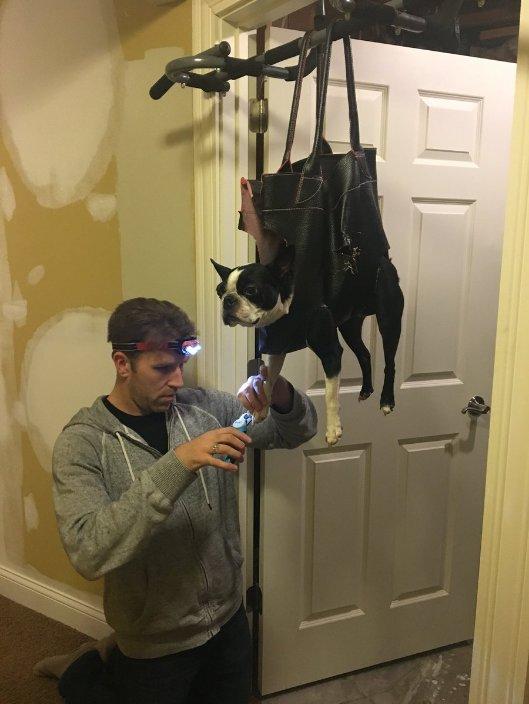 Wymyślił, jak obcinać niesfornemu psu pazurki. Ten pomysł jest szalony!