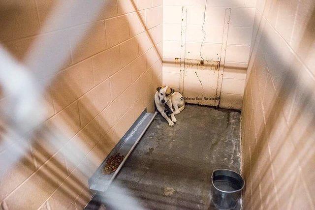 Pies ze schroniska nie pozwalał się do siebie zbliżyć. Siedział w kącie i tulił się do ściany