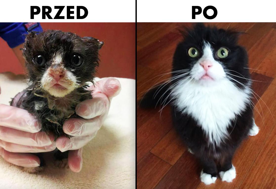 30 zdjęć kotów przed i po adopcji. Miłość zmieniła je nie do poznania