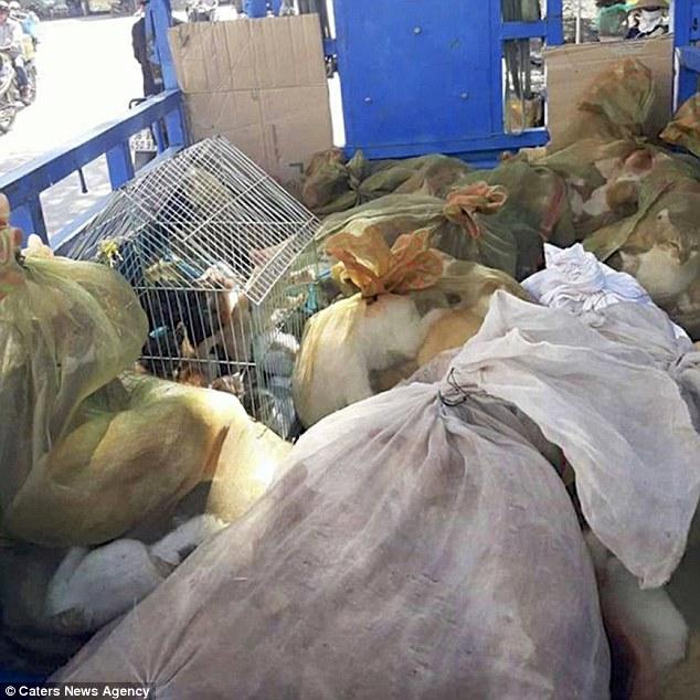 Mężczyzna sfotografował wnętrze targu z kotami w Wietnamie. Zdjęcia są przerażające