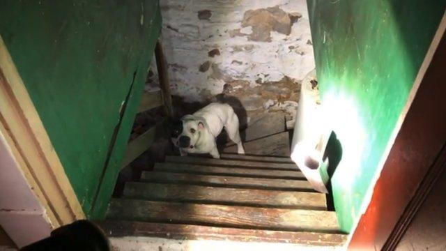 Był szczęśliwy, gdy kupił nowy dom. W piwnicy znalazł jednak psa, który złamał mu serce