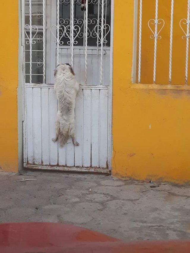 Pies zaczął wspinać się po płocie. Kiedy zobaczyła, co dzieje się dalej, szybko włączyła kamerę