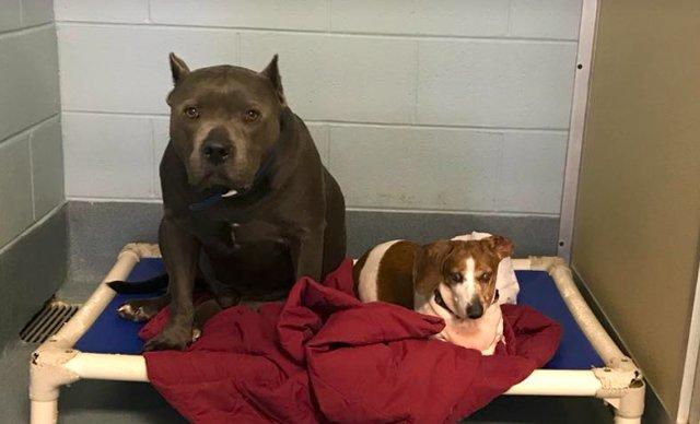 Dwa psy trafiły do schroniska. Okazało się, że czworonogi łączy nietypowa więź