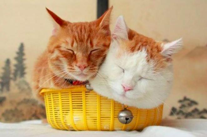 25 zabawnych kotów, które wcisnęły się w pozornie niemożliwe miejsca