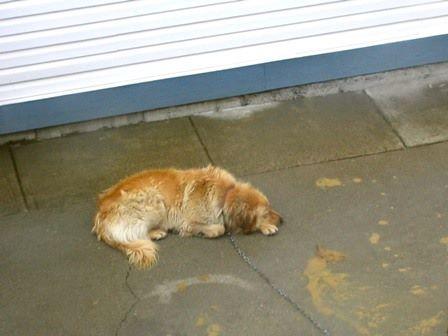 Nie mogli dłużej znieść widoku psa sąsiada na łańcuchu. Postanowili wziąć sprawy w swoje ręce