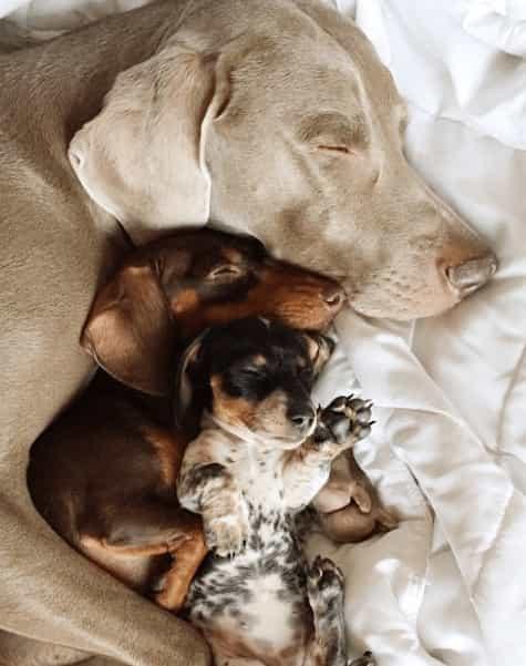 """Dwa psy poznają swoją nową młodszą siostrę. """"A co to za dziwny stwór?!"""""""