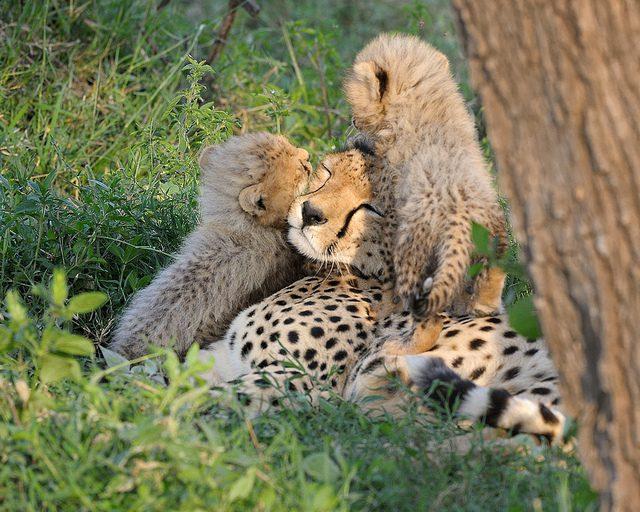 Dzikie zwierzęta