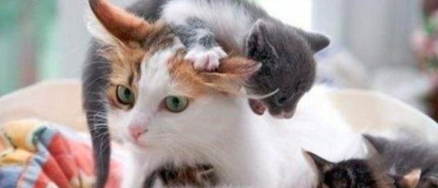Kotka i kociątko