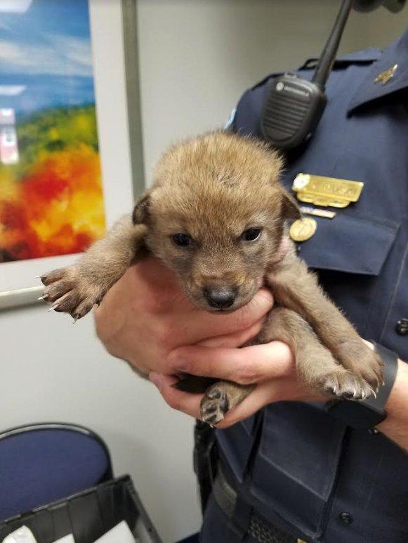 Myślał, że uratował małego szczeniaka, ale okazało się, że był w wielkim błędzie