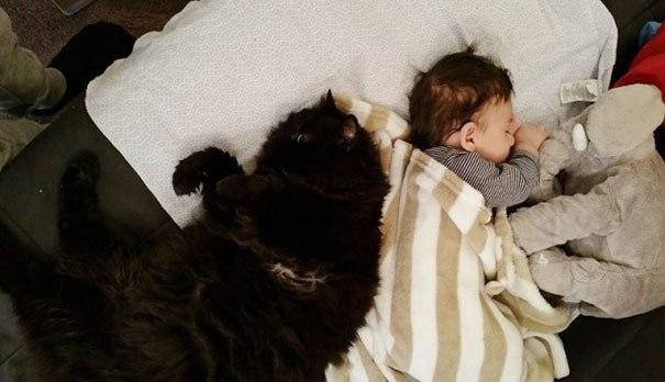 Kotka nie odstępowała swojej ciężarnej właścicielki nawet na krok. Kiedy w końcu urodziła…