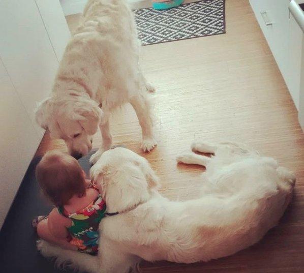 Dwa psy z niecnego powodu wkradły się do pokoju dziewczynki