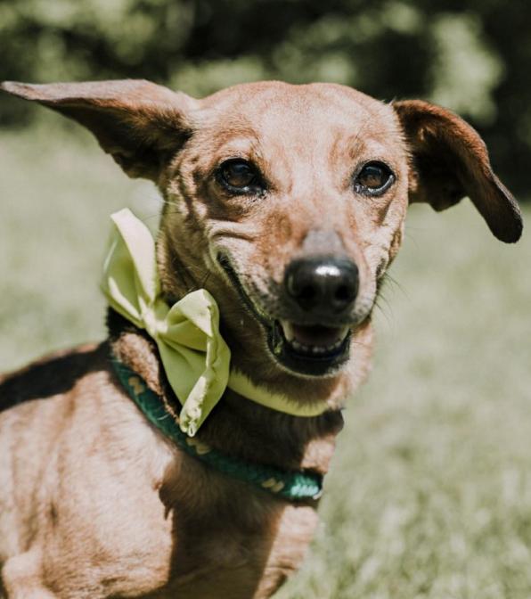 Polska młodzież nagrała piosenkę, aby pomóc starszym psom ze schroniska. Efekt jest wzruszający